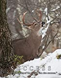 Whitetail Deer Motivational Poster Art Print 11×14 Bow Hunting Buck Commander Wall Decor Pictures