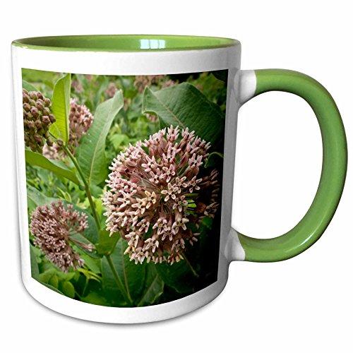 3dRose Danita Delimont - Flora - Minnesota, Eagan, Jenson Lake Park, milkweed flora - US24 RSP0011 - Rob Sheppard - 11oz Two-Tone Green Mug - Eagan Outlets