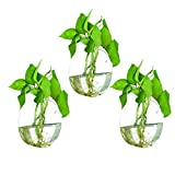 NewDreamWorld's Set of 3pcs Large Discoid Glass Wall Vase Wall Mounted Plant Planters Indoor Wall Gardening Home Decor Wall Decor For Sale