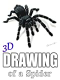 3D Drawing of a Spider