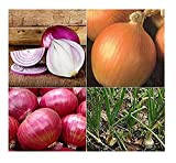David's Garden Seeds Collection Set Onion Open Pollinated SL4343 (Multi) 4 Varieties 1100 Seeds (Non-GMO, Open Pollinated, Organic)