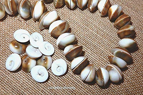 - 1/4 Lb Shiva Operculum Swirl Eye Shell Large 17mm Seashell Domed Round Beads
