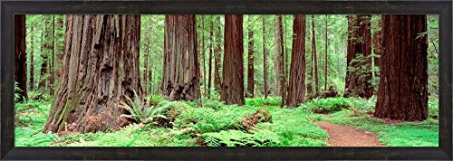 Avenue Of The Giants, Founders Grove, California by Panoramic Images Framed Art Print Wall Picture, Espresso Brown Frame, 40 x 14 (Redwoods Founders Grove Framed Art)