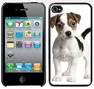 Apple iPhone 5 5S Black 5B103 Hard Back Case Cover Color Cute Jack Russell Terrier Puppy