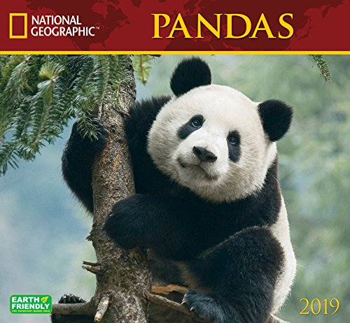 National Geographic Pandas 2019 Wall Calendar