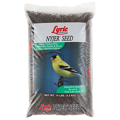 Lyric 2647449 Nyjer Seed - 10 lb. (Best Bird Feeder For Niger Seed)