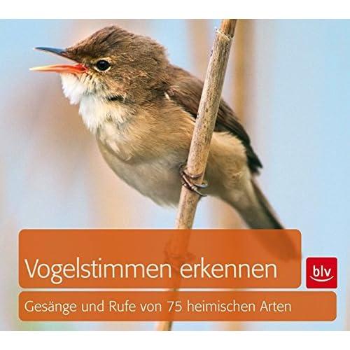kostenlos vogelstimmen