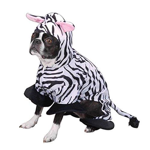 Zack  (Zebra Cat Costume)