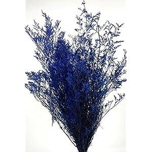 Preserved Dyed Caspia 8 oz.Cobalt Blue - Excellent Home Decor - Indoor & Outdoor 88