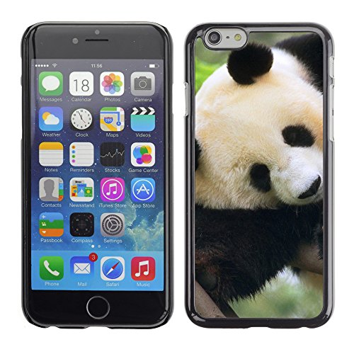 Premio Sottile Slim Cassa Custodia Case Cover Shell // V00003348 panda géant dans un arbre // Apple iPhone 6 6S 6G 4.7""