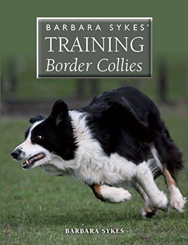 Barbara Sykes' Training Border - Border Show Collie