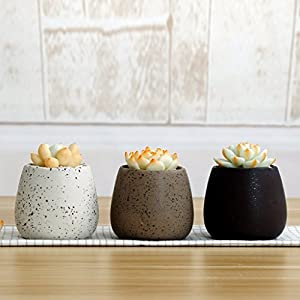 Danmu 3Pcs of Random Color Small Ceramic Rustic Style Planter for Succulents Cacti and Air Plants 64