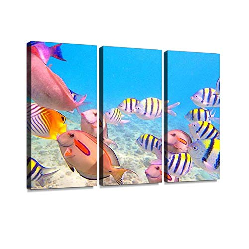 Variety of Reef Fishes in Beaches of Kauai Hawaii Print On Canvas Wall Artwork Modern Photography Home Decor Unique Pattern Stretched and Framed 3 Piece