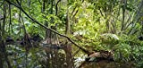 Reptile Habitat Background; Rain Forest Swamp, for 36x18x36 Terrarium, 3-sided Wraparound