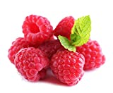 buy 2000Pcs Red Raspberry Seeds Fruit Plant Juicy Delicious Rubus Idaeus Bush BD108 now, new 2019-2018 bestseller, review and Photo, best price $10.99
