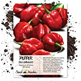 "100 Seeds, Hot Pepper ""Red Habanero"" (Capsicum annuum) Seeds by Seed Needs"