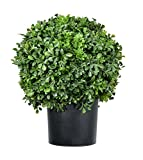 DE Pre-Potted 16 Inches High Ball Shaped Boxwood Topiary- 14 Inch Diameter - Plastic Pot
