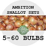 5 Bulbs: Ambition Shallot Bulb Sets, Garden Plant Seed Multiplier Onion Planting Shallots