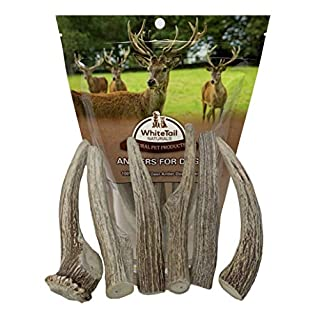 WhiteTail Naturals Hard Axis Deer Antlers for Dogs (6 Pack- Medium 5-7 Inches) Antler Chews | USA Natural Dog Chew | Perfect for Aggressive Chewers