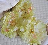 123 * single simulation method Rhubarb Hosta female - Best Reviews Guide