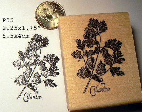 Cilantro herb rubber stamp P55 (Basil Stamp)
