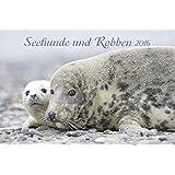 Seehunde und Robben 2016