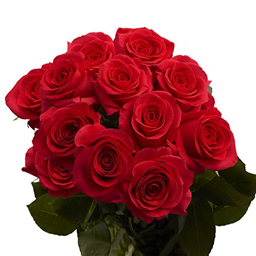 - GlobalRose 1 Dozen Red Roses- Fresh Cut Flowers- Beautiful Long Stems
