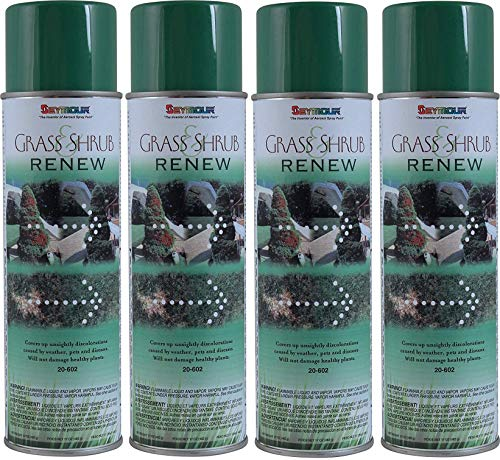 (Seymour 20-602 Grass Shrub Renew, Pristine Green (4-(Pack)))