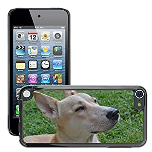 Hot Style Cell Phone PC Hard Case Cover // M00129401 Bitch Pet Pets Loyalty Friend Grace // Apple ipod Touch 5 5G 5th