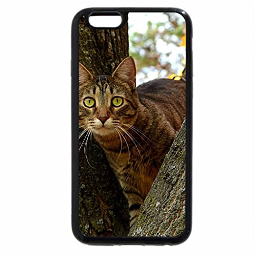 iPhone 6S / iPhone 6 Case (Black) A clever cat in a tree