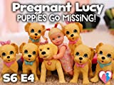 Pregnant Lucy Puppies Go Missing!