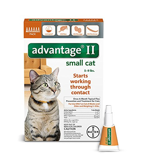 advantage ii cats small - 1