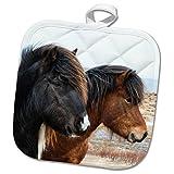 3dRose Danita Delimont - Horses - Europe, North Iceland, Akureyri. Two Icelandic horses. - 8x8 Potholder (phl_277508_1)