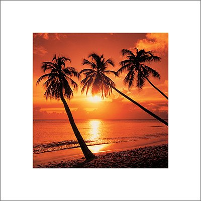 - Bob Thomas Tropical Sunset Palm Trees Photography Decorative Poster Print 16 by 16