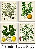 Kitchen Botanicals Illustrations - Set of 4 8x10 Unframed Art Prints - Great Kitchen Decor and Gift...