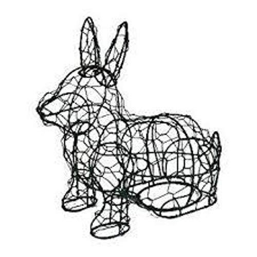 Hopping Rabbit 17