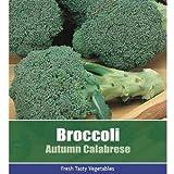 De Ree Broccoli Autumn Calabrese Vegetable Plant 175 Seeds