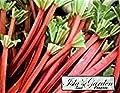Victoria Rhubarb Seeds, 75+ Premium Heirloom Seeds, ON Sale!, (Isla's Garden Seeds), Non GMO Organic Survival Seeds, 99.8% Purity, 85% Germination, Highest Quality!