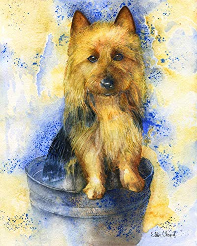 Australian Terrier limited edition signed giclee watercolor art print on watercolor paper or canvas.