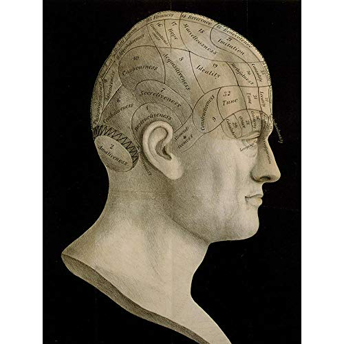 Science Phrenology Head Spurzheim Organ Brain Unframed Wall Art Print Poster Home Decor Premium ()