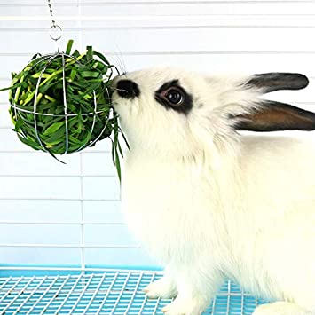 hengbaixin - Dispensador de Alimentos para hámster, Rata, Conejo, Bola de heno, Redondo, Acero Inoxidable: Amazon.es: Productos para mascotas
