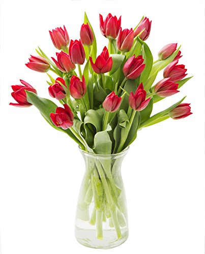 Holland Floral Vase (KaBloom 20 Red Tulips Fresh from Holland with Vase)