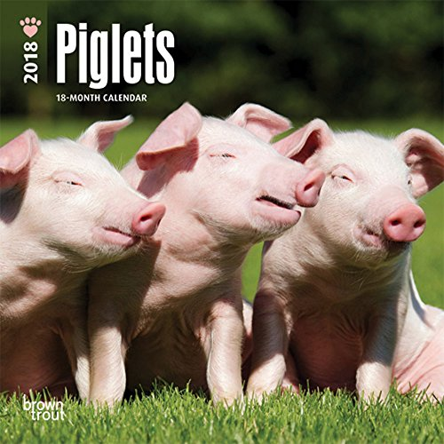 Piglets 2018 7 x 7 Inch Monthly Mini Wall Calendar, Domestic Pet Baby Pig Farm Animals