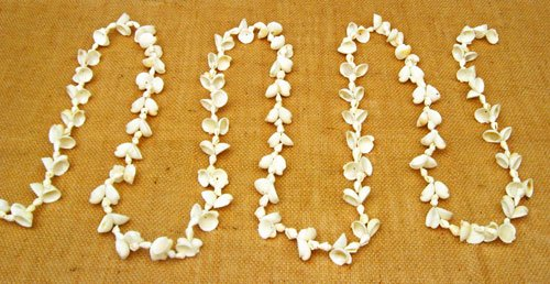 Clamrose Nassa Shell Strand Garland, 8 Foot 7 Inches