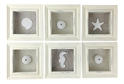 Beach Decor Sealife Shadow Boxes Seahorse Starfish Urchin Shell Seashell, Set of 6 by Beachcombers