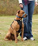 Kurgo Snout About Dog Head Halter | Headcollar
