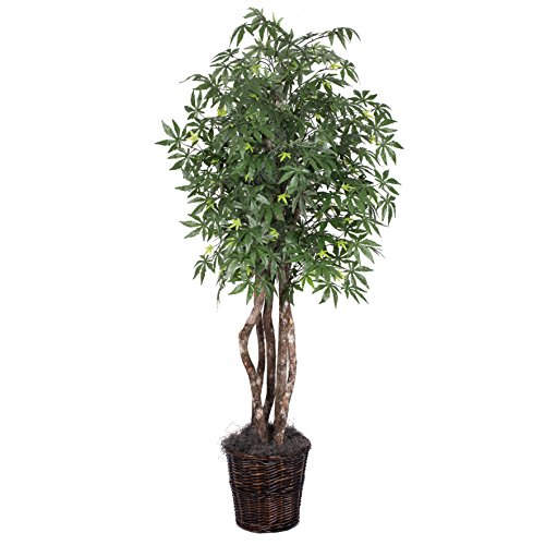 Vickerman 6' Artificial Japanese Maple Executive set in Rattan Basket by Vickerman