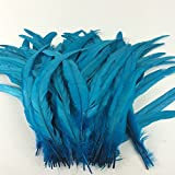 Sowder Turquoise Rooster Coque Tail Feathers 12-15inch Lengh Pack of 50