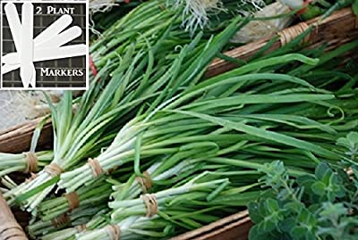 Garlic Chives Seeds Herb (Organic/heirloom) 200 Seeds Upc 646263362952 + 2 Plant Markers