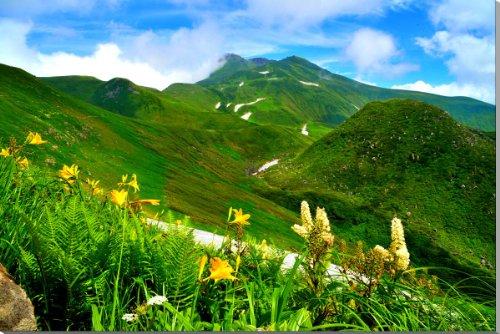 「鳥海山のニッコウキスゲ」 日本百名山・日本百景の一つ 80.3cm ×53.0cm YMA-073-M25 風景写真パネル 新築祝い、結婚祝いなど プレゼントに喜ばれます。